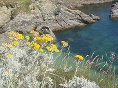Immortelle flowers and the Mediterranean Sea : Corsica, defined