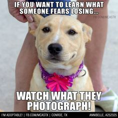 Completely explains the 2,465 dog photos on my phone :) #mcaspets #adoptme