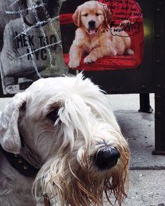 The Scoop: Josh Rubin, Evan Orensten, and Logan - Dog Milk Dog Milk, Logan, Pets, Animals, Design, Animals And Pets, Animales, Animaux, Design Comics