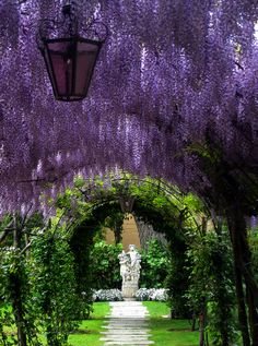 Purple rain - Wisteria tunnel This is my childhood in Spring. A rounded pergola filled with colorful climbing roses on top and simply wisteria flowers hanging down. Ahh he aroma. Ah just a breeze, and Wisterias underfoot as if to welcome me home!