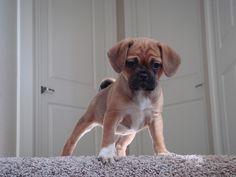 my future puppyyyy