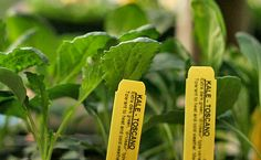 5 Benefits for Growing Your Own Food Garden -Momo