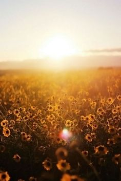 Cute Wallpapers, Wallpaper Backgrounds, Nature Pictures, Beautiful Pictures, Image Zen, Gold Aesthetic, Mellow Yellow, Beautiful World, Aesthetic Pictures