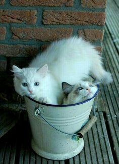 Enamel bucket and cats. Cute