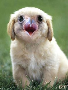 Labracondor.   28 Unsettling Animal Mashups That Should Probably Never Have Happened