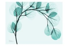 Teal Eucalyptus Póster por Albert Koetsier en AllPosters.com.ar.