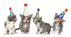 Check out these funny presents for cat lovers that'll make them smile and laugh. The best gifts are those they remember for years to come.so make them ROFL with these hand picked cat-mad gifts! Special Birthday Cards, Birthday Wishes Funny, Birthday Songs, Singing Happy Birthday, Cat Birthday, Birthday Greeting Cards, Dear Dad, Birthday Card Template, Funny Presents