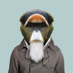 Zoo portraits by Yago Partal, De Brazza's monkey