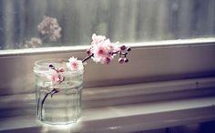 I love the simplicity #cherryblossom #jar