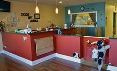 Resultado de imagen para dog grooming salon decorating ideas