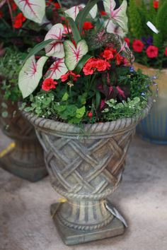 Make Mother's Day one to remember! Give her a beautifully planted mixed pot for the porch!