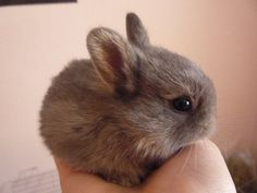 Bunny baby - 50 Cute Bunny Pictures  <3 !