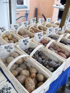 #Potato histories: http://boiledwords.blogspot.de/2013/09/a-short-introduction-in-diverse-world.html #foodie #Germany #recipes #cooking