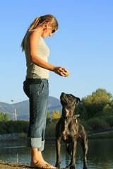 Tips for Training Your Pit Bull