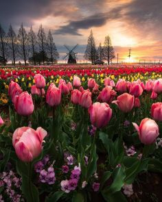 ==================================== 🌍 Akebonoyama Park, Kashiwa Japan ===================================== P H O T O B Y @kytnc1397706… Beautiful Flowers, Beautiful Places, Beautiful Pictures, Nikon, Pintura Country, Historical Art, Belleza Natural, Coffee Art, Landscape Photographers