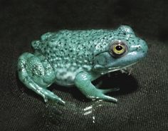 Rethink Retreats prioritise month eating the toad Prioritize, Toad, Blog, Blogging