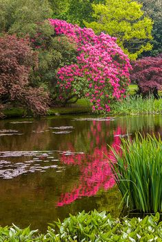 Irland und Irisches Rhododendrons border the lake at Mount Stewart, N. Ireland How to buy Rugs Artic