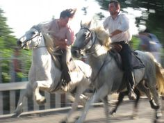 Horses, South of France