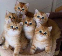 Cute Little Kittens, Cute Baby Cats, Kittens Cutest, Super Cute Kittens, Baby Animals Super Cute, Cute Little Animals, Funny Cute Cats, Cute Funny Animals, Pretty Cats