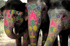hehe i love elefantes. Funny Elephant, Elephant Love, Elephant Art, Elephant Tattoos, Happy Elephant, Elephant Pattern, Beautiful Creatures, Animals Beautiful, Majestic Animals
