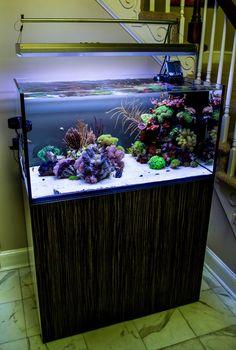 10 Tips on Designing a Freshwater Nature Aquarium Coral Reef Aquarium, Saltwater Aquarium Fish, Nature Aquarium, Saltwater Tank, Marine Aquarium, Marine Tank, Marine Fish, Tropical Freshwater Fish, Tropical Fish