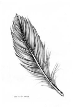 feather Art Print by iphigenia Feather Tattoo Design, Feather Art, Hirsch Tattoo Frau, Watercolor Feather, Baby Tattoos, Future Tattoos, Pencil Drawings, Art Sketches, Art Projects