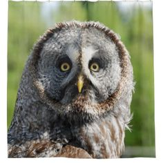 Owl_20180219_by_JAMFoto Shower Curtain - animal gift ideas animals and pets diy customize
