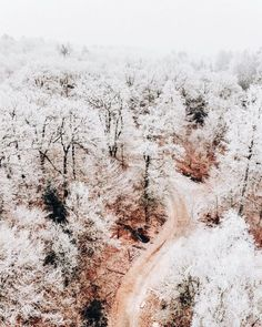 White and pink in a winter wonderland