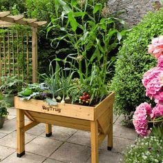 自然豊かなお庭で野菜がたくさん実ったベジトラグ