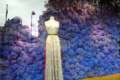 A entire wall of FRESH Hydrangea in the Dior window in Paris