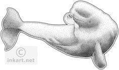 Beluga whale dotting