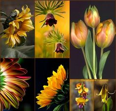 ~Katarina~Collage by Miss Katarina Love Collage, Beautiful Collage, Beautiful Flowers, I Need A Hobby, Montreal Botanical Garden, Collages, Corporate Flowers, Happy Birthday Girls, Beautiful Color Combinations