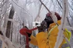 Scientists Make Perfect Ice Storms To Protect Forests | Video