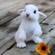You Dropped Your Flower. Cute Little Things, Cute Little Animals, Cute Funny Animals, Needle Felted Animals, Felt Animals, Animals And Pets, Baby Animals Pictures, Cute Animal Pictures, Cute Puppies