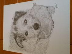 One of my pet drawings -teddy