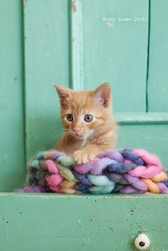 Gatito jugando con lana trenzada