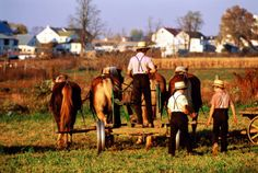 453838-001-pennysylvania-lancaster-county-amish-people-gettyimages.jpg (505×340)