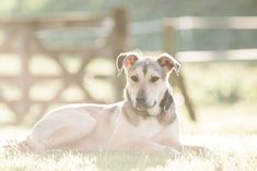 Equine portrait photographer based in New Zealand. Portrait Photographers, Dogs, Photography, Animals, Photograph, Animales, Animaux, Pet Dogs, Fotografie