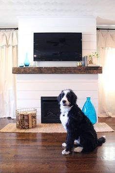 Home Update: Shiplap Fireplace and bernedoodle @till
