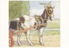Cornelis Jetses, Bok