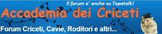 Forum su Criceti Cavie Conigli e altri animali forum criceti russi, forum criceti dorati, forum criceti roborosky,gabbia criceti,gabbiette per criceti,i criceti,gabbie per criceti,gabbia per criceti,primo criceto,accudire criceto,criceto,criceti,veterinario online,forum,forum criceti, gabbia criceti .