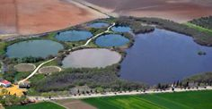 Laguna del Gobierno, Lantejuela. Birdwatching in the countryside of Seville