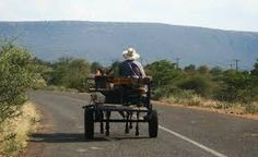 on the tar Outdoor Furniture Sets, Outdoor Decor, South Africa, Donkeys, Expressionism, Cart, Animals, Image, Animales