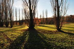 La solitude des arbres auprès du Lac...Jeux d'ombres et de lumières.