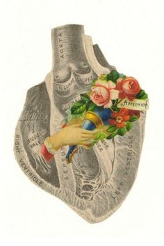 Affection anatomical collage