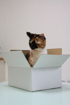 202 Cats In Boxes