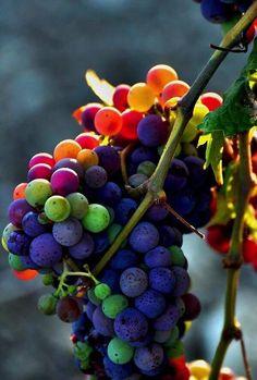 #wine #italy #grape #vineyard www.wineweddingitaly.com/en