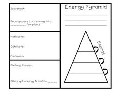 Foldable to define energy pyramid other than the traditional note taking style that students can glue into a journal.