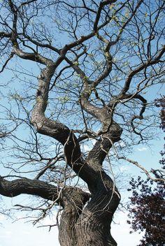 Tree trunk, Sunny Hill Park, Hendon London NW4, 15th April 2014