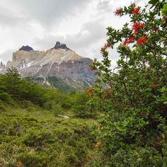 Los Cuernos del Paine in springtime are even more majestic. #Mountains #Blossom #Spring #Patagonia #Travel #Chile #Hiking #Sky #Clouds #SouthAmerica #Travelgram #Nature